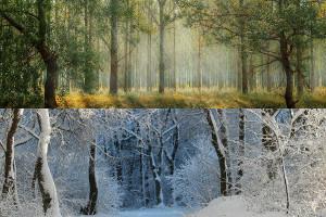 Pacer Seasonal Sector Rotation ETF
