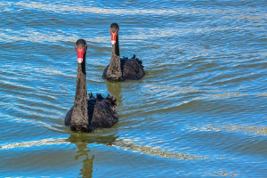 Amplify launches second Black Swan ETF