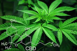 Purpose medical marijuana ETFs