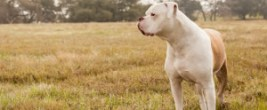 GeaSphere Advisors debuts US 'Alpha Dog' ETF