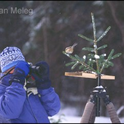 Best Study Chair Folding Amazon Nature Photography Tips By Ethan Meleg