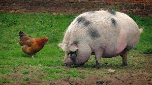 The Chicken and the Pig - which one are you?