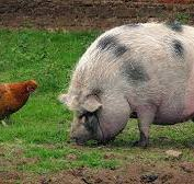 The Chicken and the Pig – which one are you?