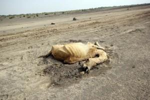El Nino in Ethiopia