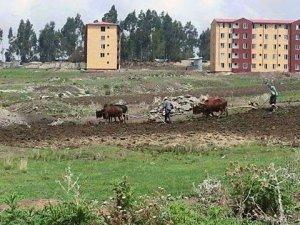 Oromo Farmers