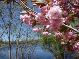 Spring at Ell Pond Park