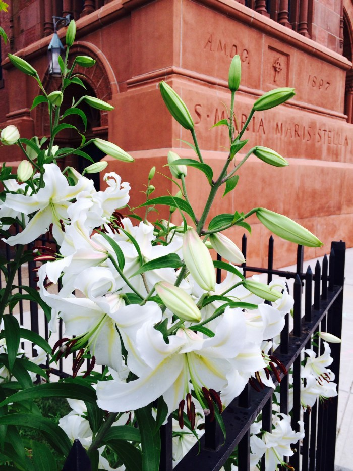 Lilies at St. Mary Star of the Sea