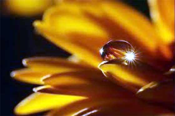 goccia d'acqua su fiore giallo