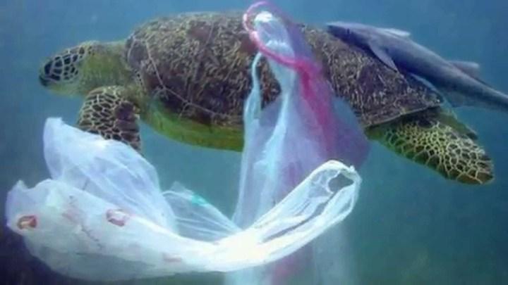 ISOLA DI PLASTICA DEL PACIFICO: L'ISOLA DELLA SPAZZATURA – Un disastro ambientale di proporzioni enormi