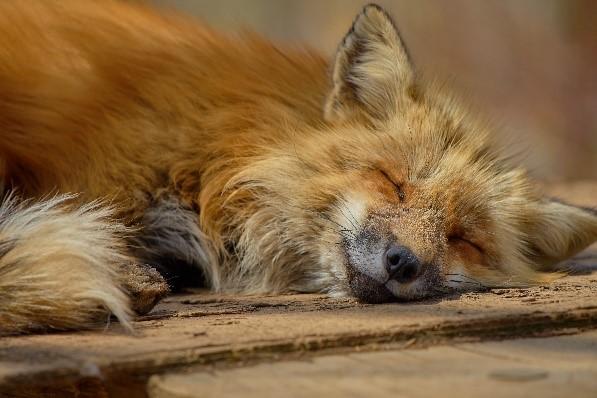 BENESSERE ANIMALE: QUANDO POSSIAMO DIRE CHE UN ANIMALE STA BENE DAVVERO?