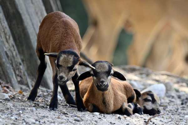 VITTIME DELL'ARROGANZA: RISPETTARE LE REGOLE SALVA GLI ANIMALI