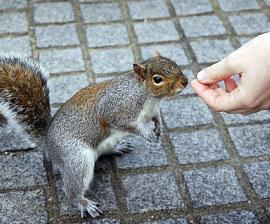 TURISMO E CATTIVE ABITUDINI: ALIMENTARE GLI ANIMALI SELVATICI