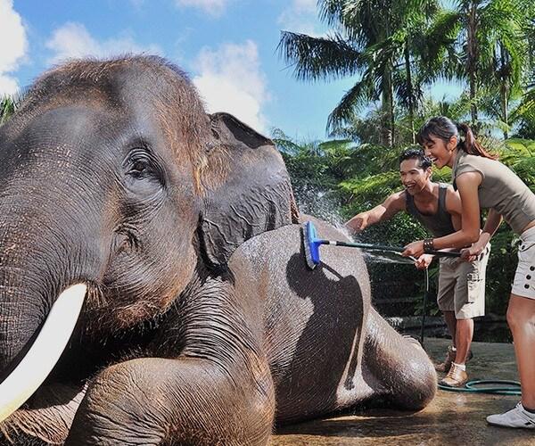 thailandia elefanti; santuari etici