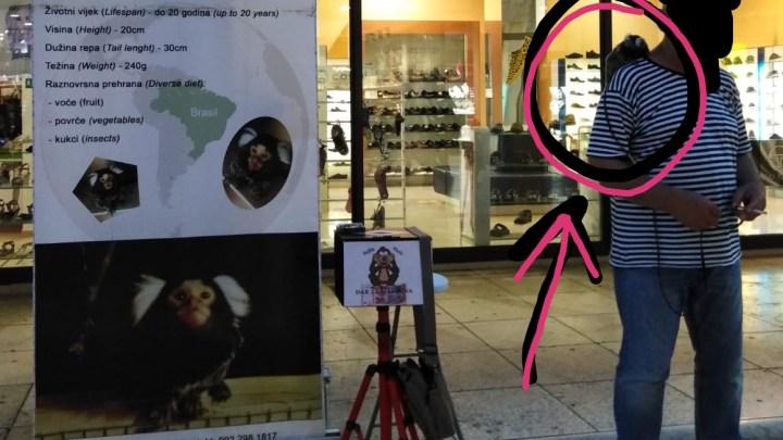 CROAZIA: MARMOSET E PAPPAGALLI SFRUTTATI PER I SELFIE DEI TURISTI