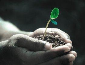 suolo, natura