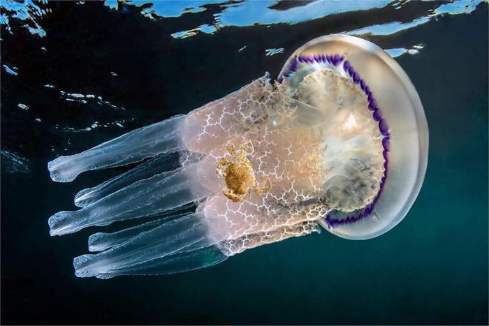 uccidere meduse