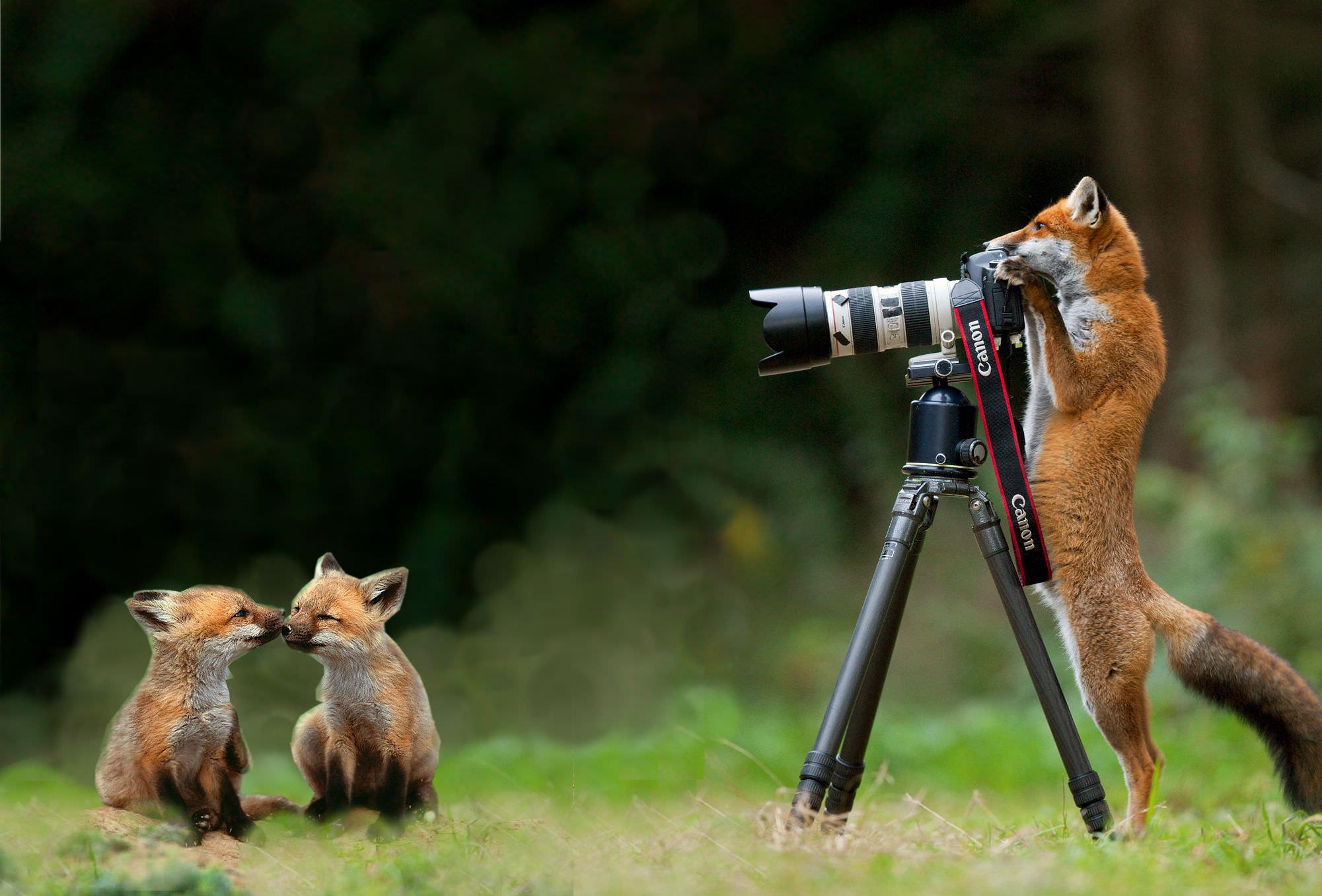 fotografia naturalistica