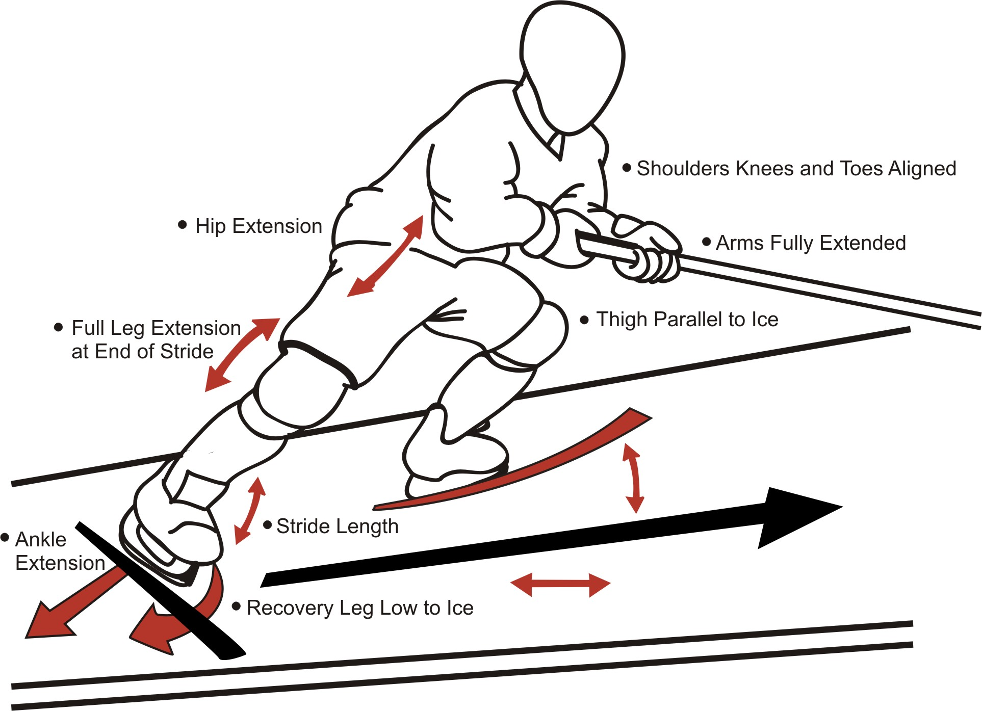 hockey player diagram hunter ceiling power skating development etobicoke dolphins