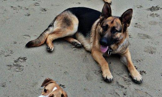 perros playa etohelp