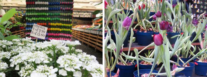 Amsterdam,le célèbre marché aux fleurs (Bloemenmarkt) 2015 ©Etpourtantelletourne.fr