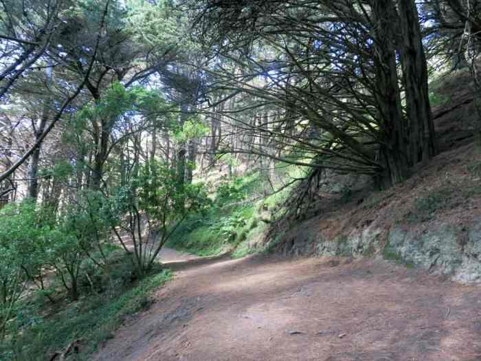 Nouvelle Zélande Wellington - Mont Victoria - lieux tournages le seigneur des anneaux2016 ©Etpourtantelletourne.fr