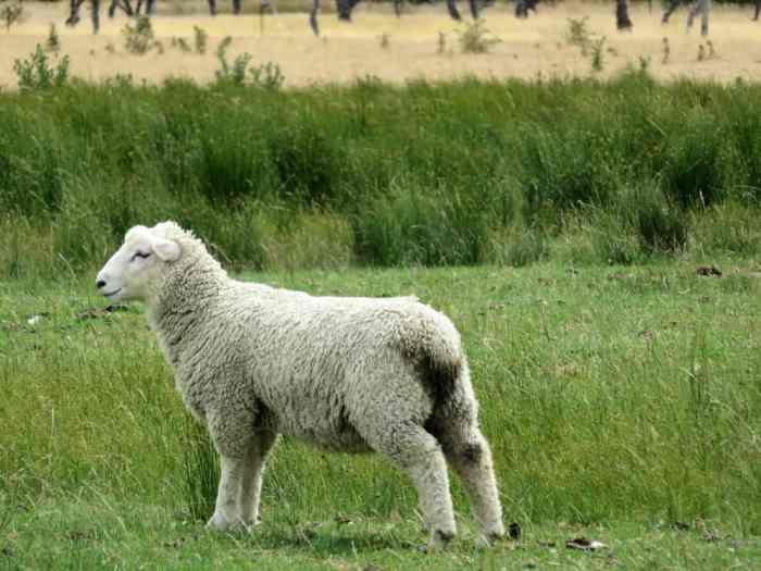 Nouvelle Zélande Glenorchy 2016 ©Etpourtantelletourne.fr