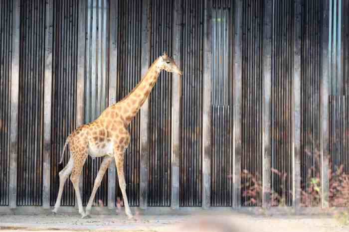 Lyon zoo parc de la tête d'or ©Etpourtantelletourne.fr