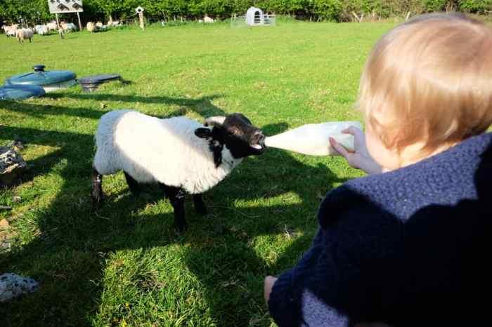 hébergement à la ferme Irlande du Nord ©Etpourtantelletourne.fr