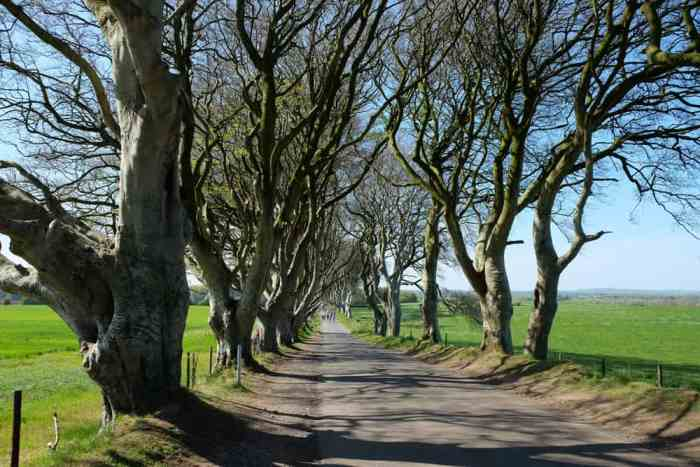Dark Hedges Game of thrones ©Etpourtantelletourne.fr
