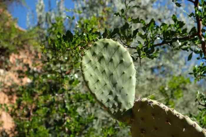 Cactus Anti-Atlas Maroc ©Etpourtantelletourne.fr