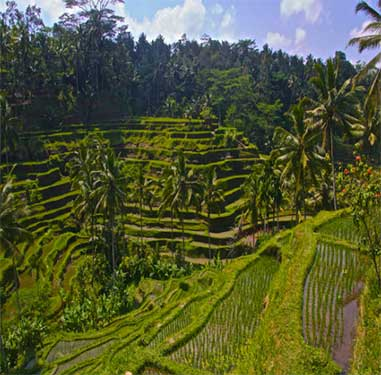Image Result For Airfare And Accommodation Packages To Bali