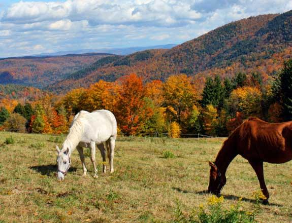 Maine Horseback Riding ETravelMaine