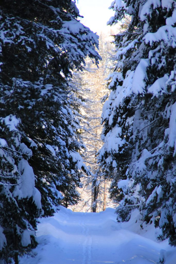 sentiero invernale con alberi innevati alto adige