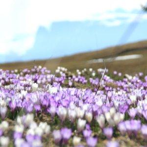 primavera malga meltina croci scilar