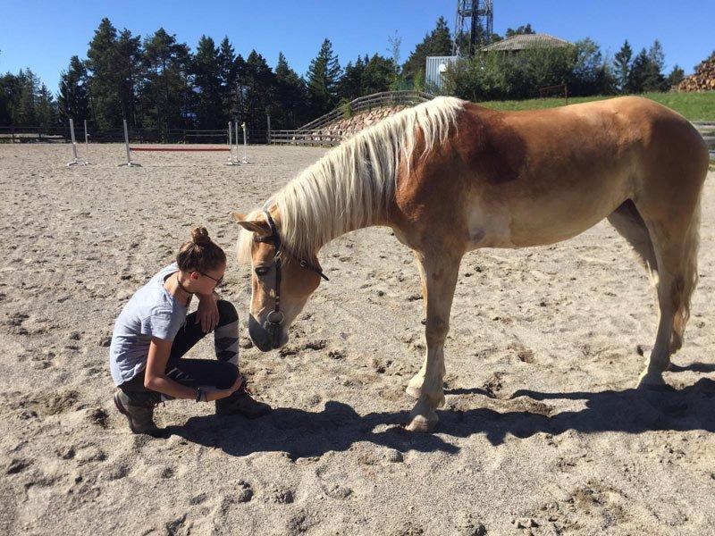 bindung mensch pferd haflinger bodenarbeit