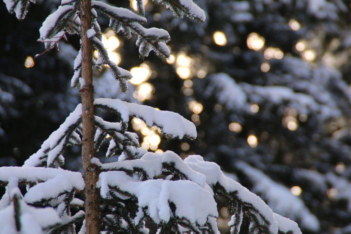 winter tannenbaum mit schnee