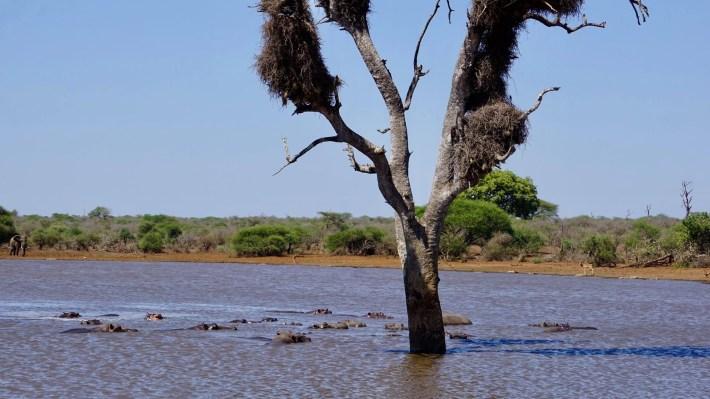On part à la chasse aux photos dans le Kruger en Afrique du Sud - Un rassemblement d'animaux