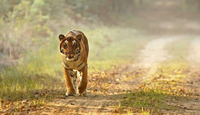 Dudhwa: Biodiverse tourism hotspot