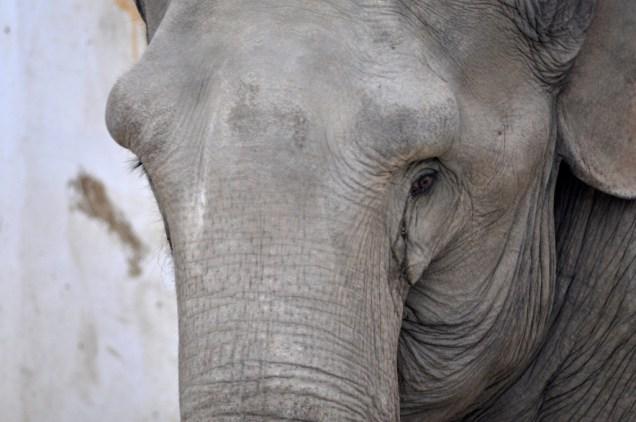 Foto elefant