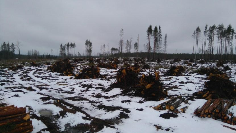 Stumps - Keuruu, Central Finland ©Matti Aalto