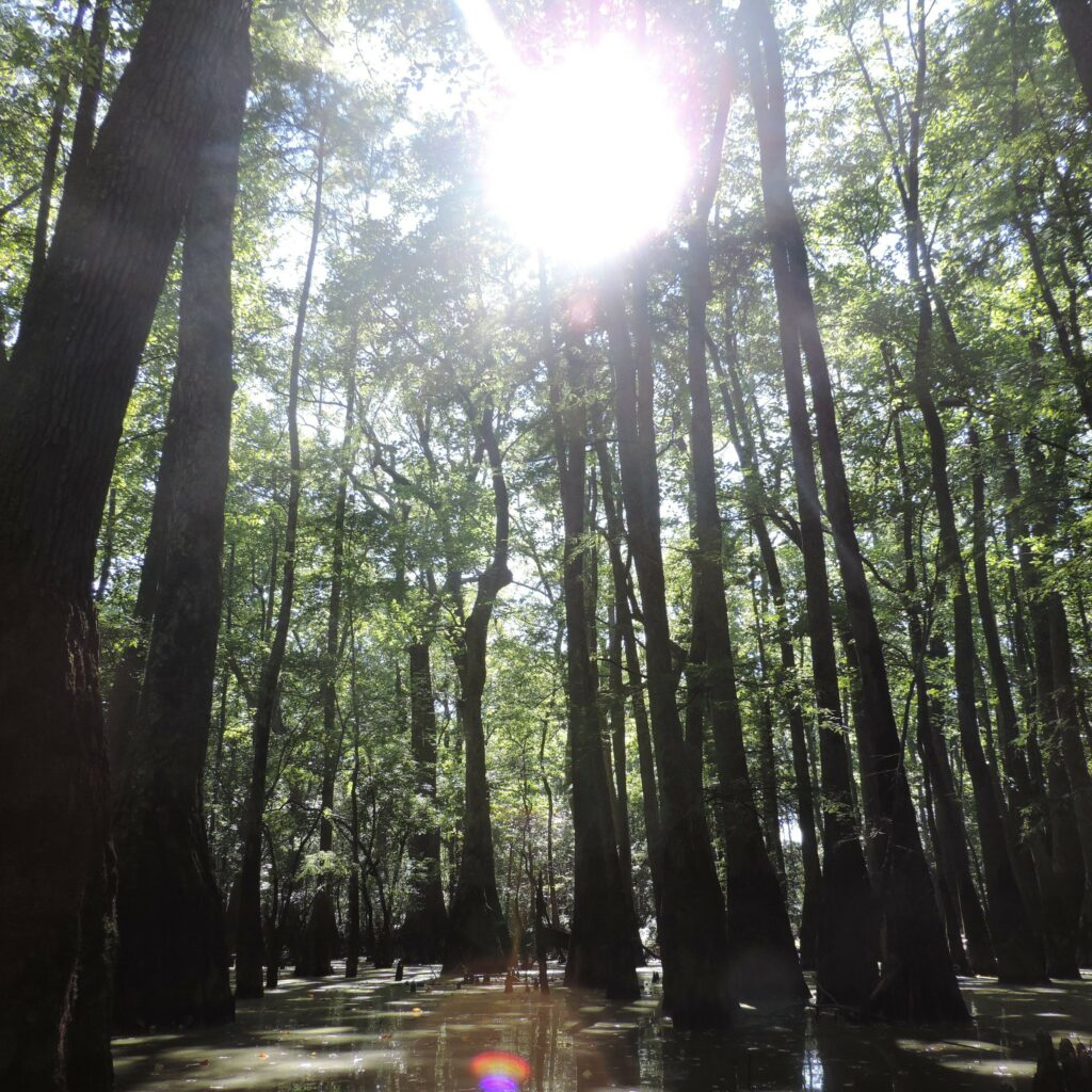 A beautiful natural hardwood forest in Virginia, USA.