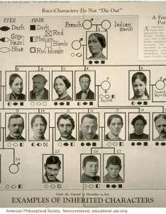 race characters do not die out examples of inherited characteristics also eugenics archive rh eugenicsarchive