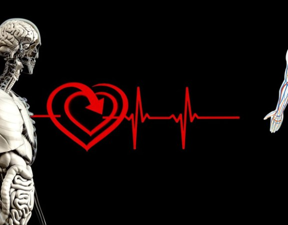 cœur et artères