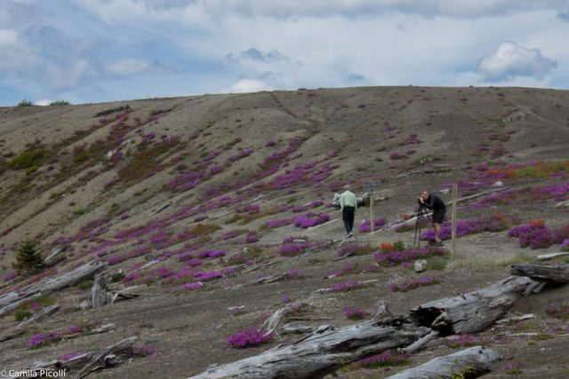 Mount Saint Helens-4