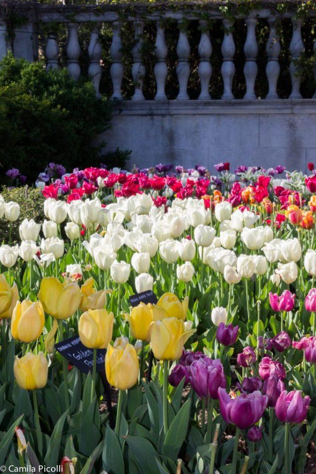Brooklyn Botanical Gardens-24