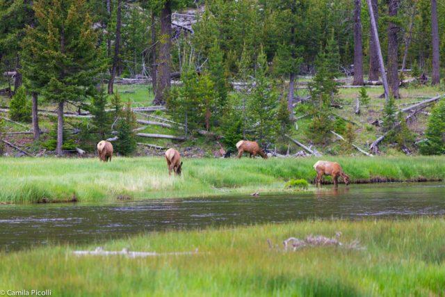 Roteiro de dois dias em Yellowston