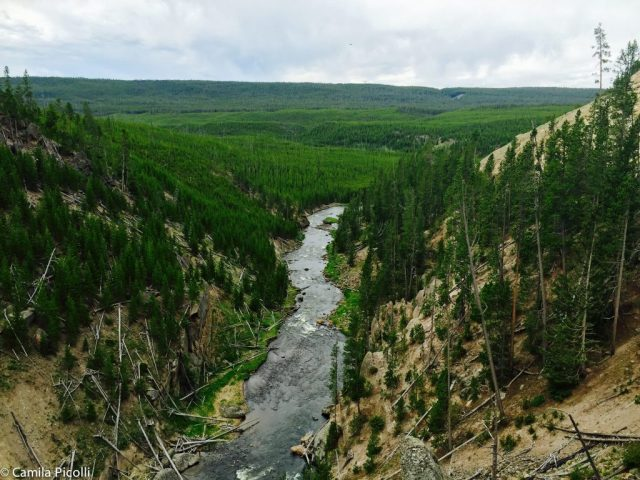 2016-06-09 Yellowstone_gibbonfals1