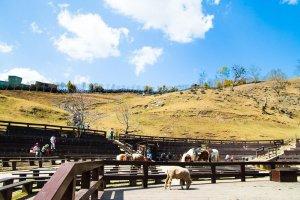 Green green grassland, cingjing farm, horses and performances