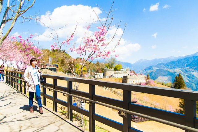 Selfie at Cingjing Farm, with Cherry Blossoms.