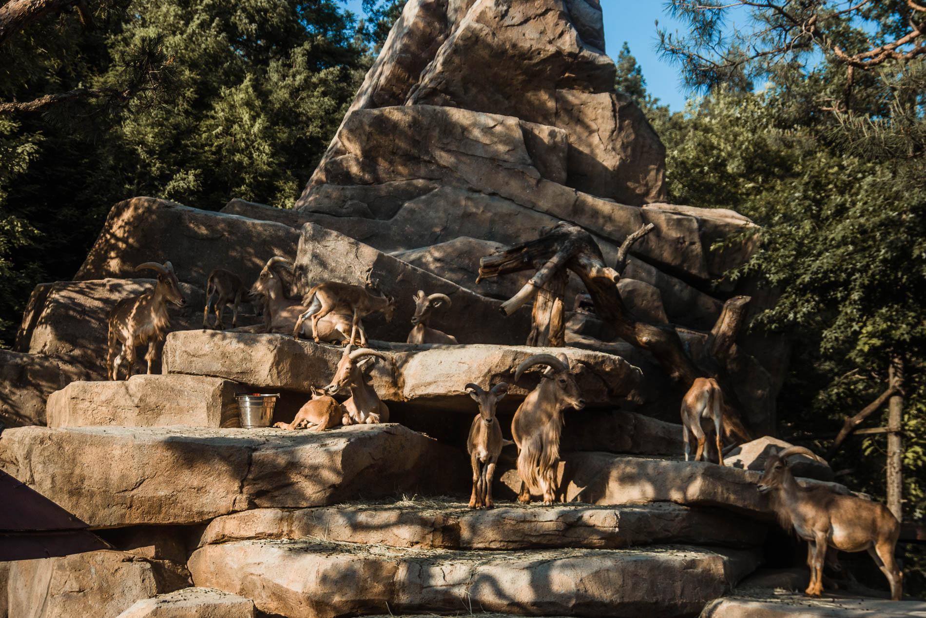 Safari world in Everland, Seoul